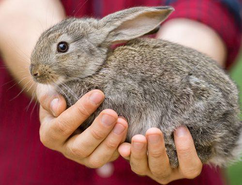 AWI unterstützt Tierschutzverein